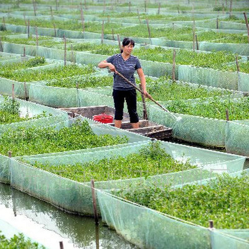 厂家生产 各种规格黄鳝网箱 网箱养殖网 水产养殖网箱质量放心