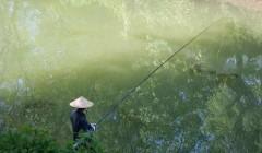 【钓鱼技巧】秋钓鲫鱼,要用这两种钓法