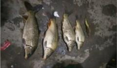 【钓鱼技巧】掌握这两个技巧四个细节,夜钓时,不愁鲤鱼不入护